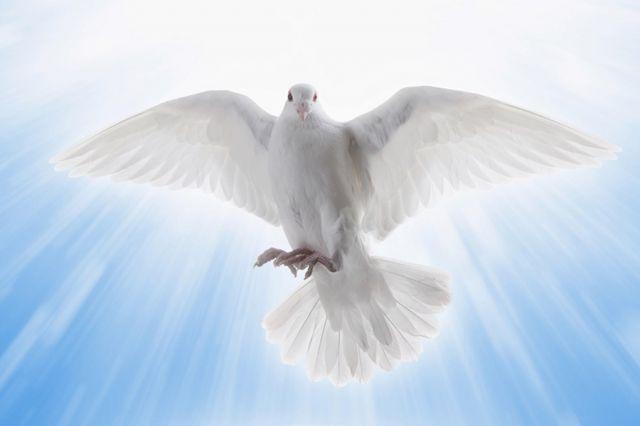 Memelihara Hidup Baru dalam Roh