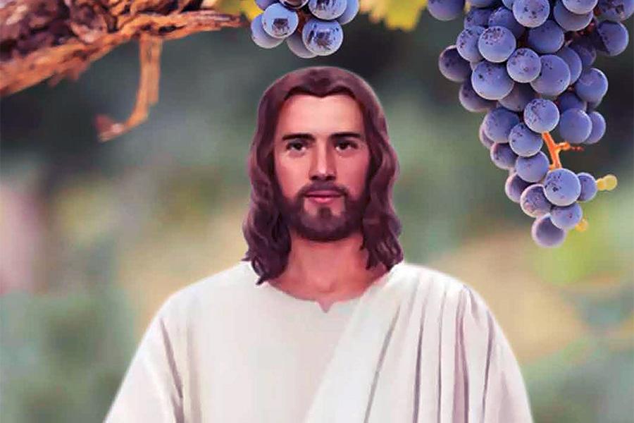 Akulah Pokok Anggur yang Benar